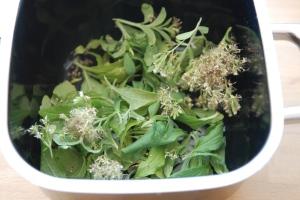 Stevia - Auszug kochn